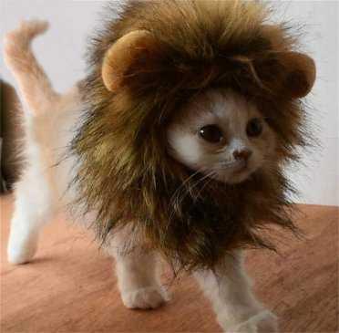 Não tenha medo! A Engenharia de Software é como um gatinho com juba de leão!